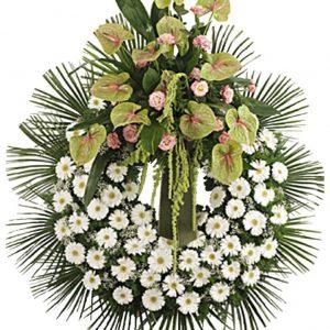 coroa funeral évora